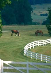 thoroughbreds in pasture