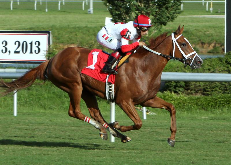 Thank You MaryLou winning the Tippett Stakes at Colonial Downs in 2013. Photo Courtesy Coady Photography.
