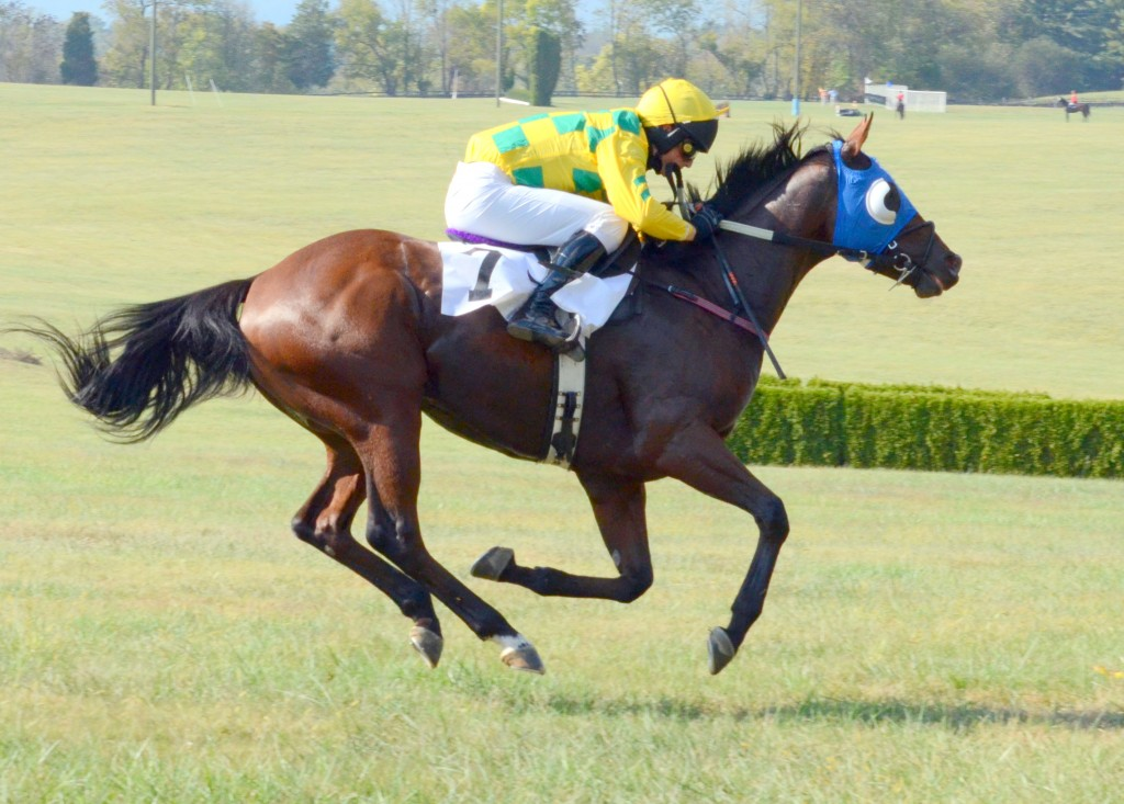 Prima Facie winning for the second time at Middleburg last weekend.