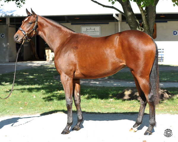 Hip 793: Louisa Lenehan's Tiznow filly sells with James Herbener tomorrow.
