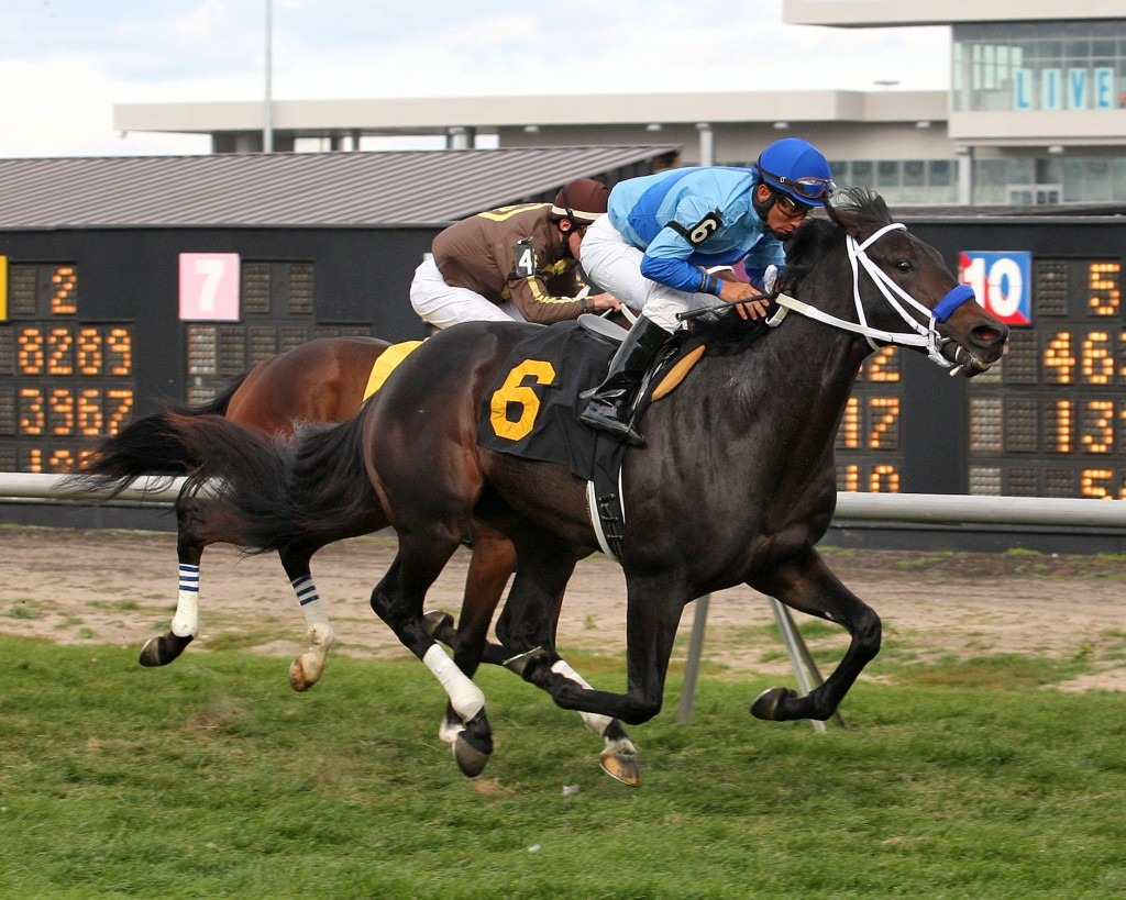 Scorched Cat (Tale of the Cat) wins his debut at Meadowlands for Virginian Magalen O. Bryant. Photo Courtesy Equi-Photo.