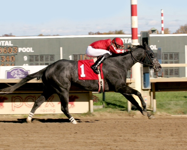 Virginia-bred Anybodyreallyknow, bred by Larry Johnson, won an allowance at Parx on November 3 for Peter Kazamias.