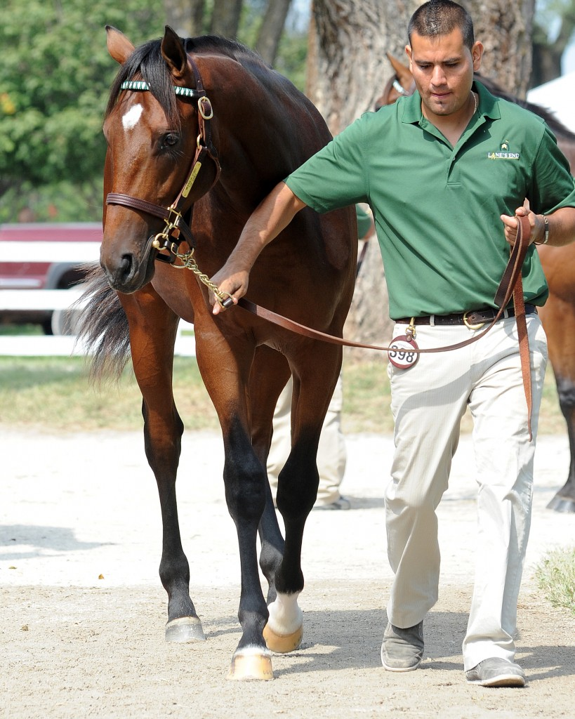 Mail as a yearling. Photo courtesy Mathea Kelly and Lane's End.