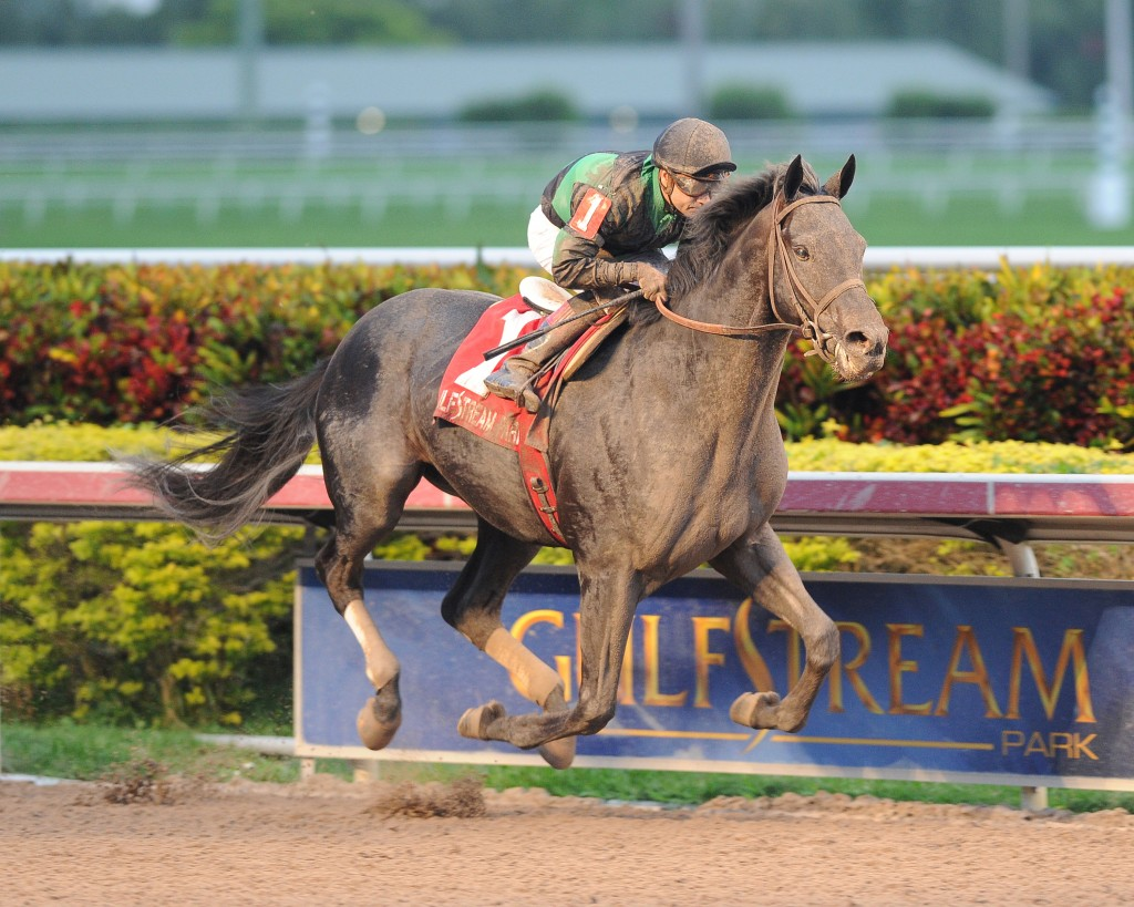 Just Call Kenny captures the Spectacular Bid at Gulfstream Park. Photo Courtesy Lauren King.
