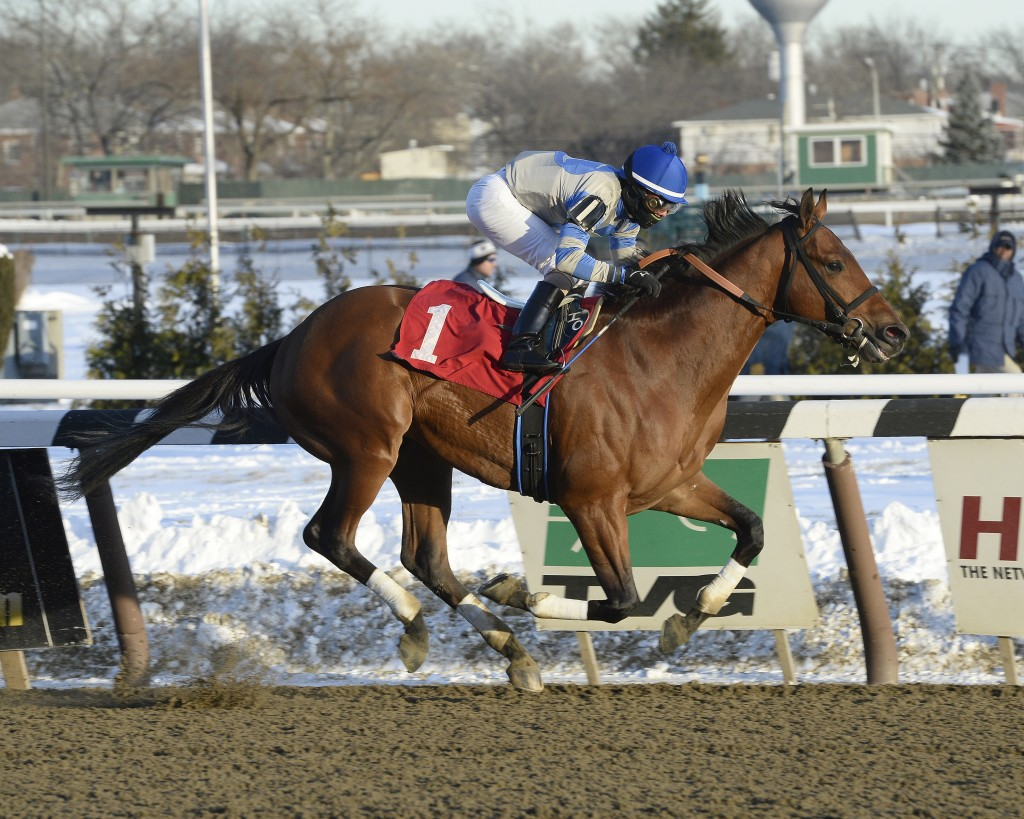 Triple Crown hopeful Ned Evans-bred Noble Moon dominated the Grade II Jerome on January 4. Photo Courtesy Adam Conglianese.
