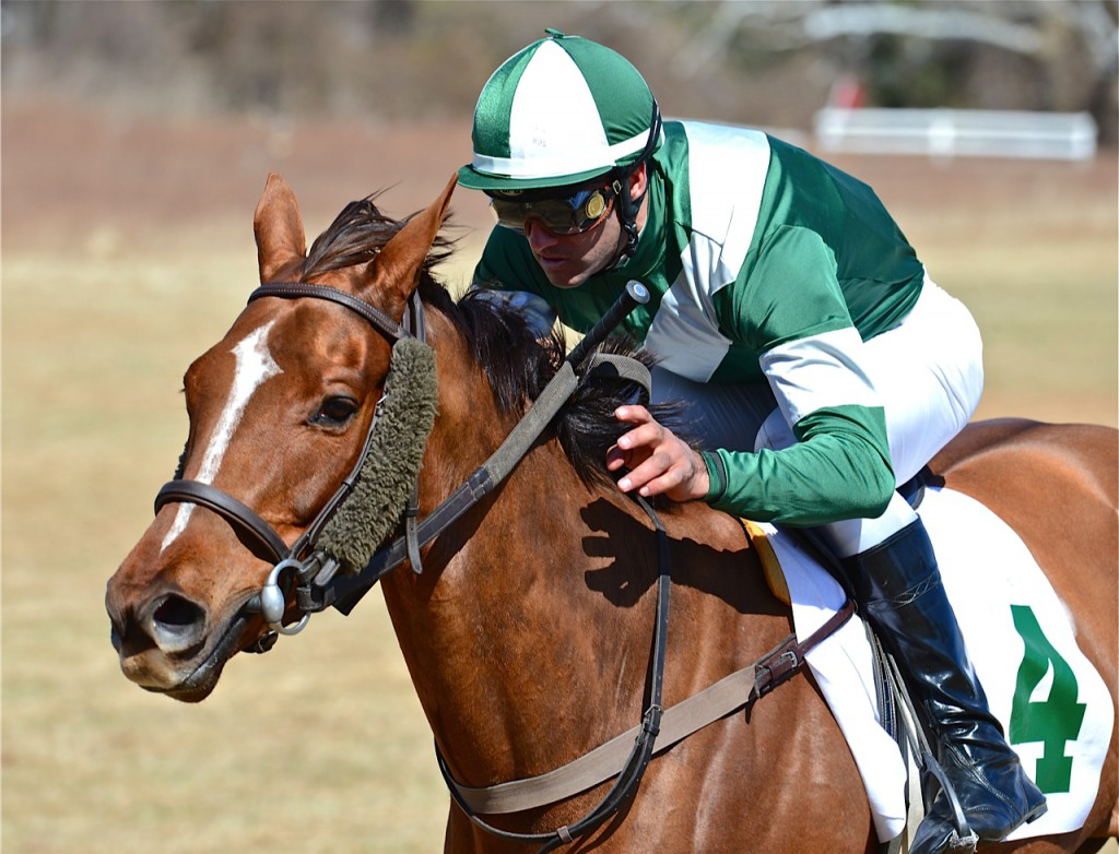 Rhetoricalquestion winning the Va-bred/sired race at Warrenton on March 15. Photo courtesy Douglas Lees.