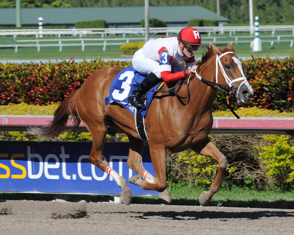 Virginia-bred Thank You Marylou dominating the Any Limit at Gulfstream. Photo by Lauren King.