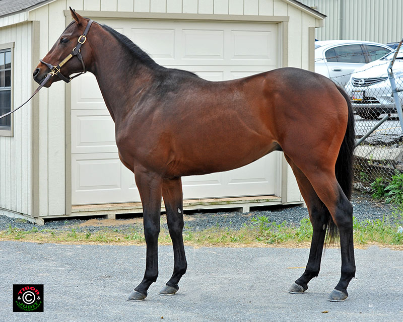 Hip 104, a colt consigned by B&C Bloodstock. Cat Thief Colt - Charm My Heart, by Silver Charm. Breezed in 10.4.