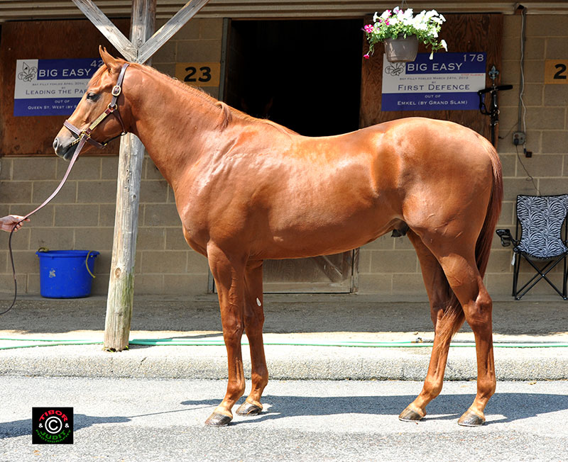 Hip 310, a colt consigned by Bo Hunt, went in 10.3. Tale of the Cat - Long N Lanky, by Cozzene.