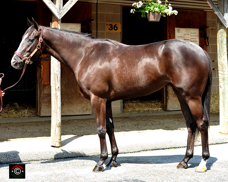 Hip 439, a filly consigned by Bo Hunt, went in 22.0. Harlan's Holiday - Ruler's Charm, by Cape Town.