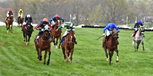 Prima Facie dominated in the VTA and VHBA-sponsored flat race on Gold Cup day.