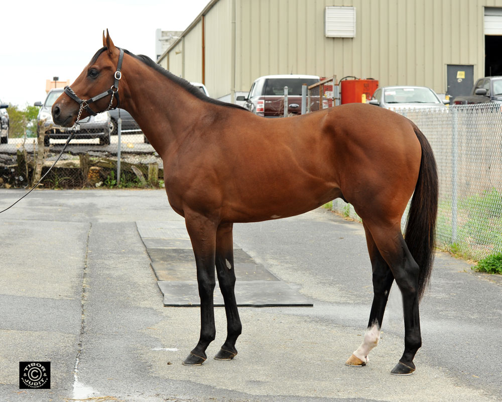 Hip 464, a colt consigned by SAB Sales, went in 10.4. Fairbanks - See Ashleigh Run, by Marquetry.