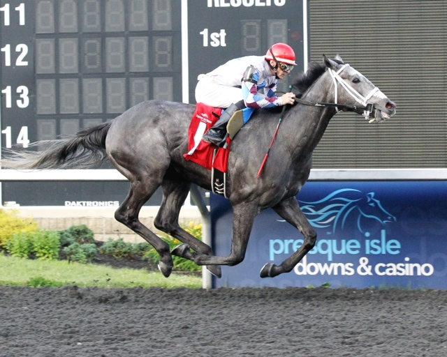 Explore, bred by Mr. and Mrs. Bertram Firestone, won an allowance going away at Presque Isle June 23. Photo courtesy Coady Photography.