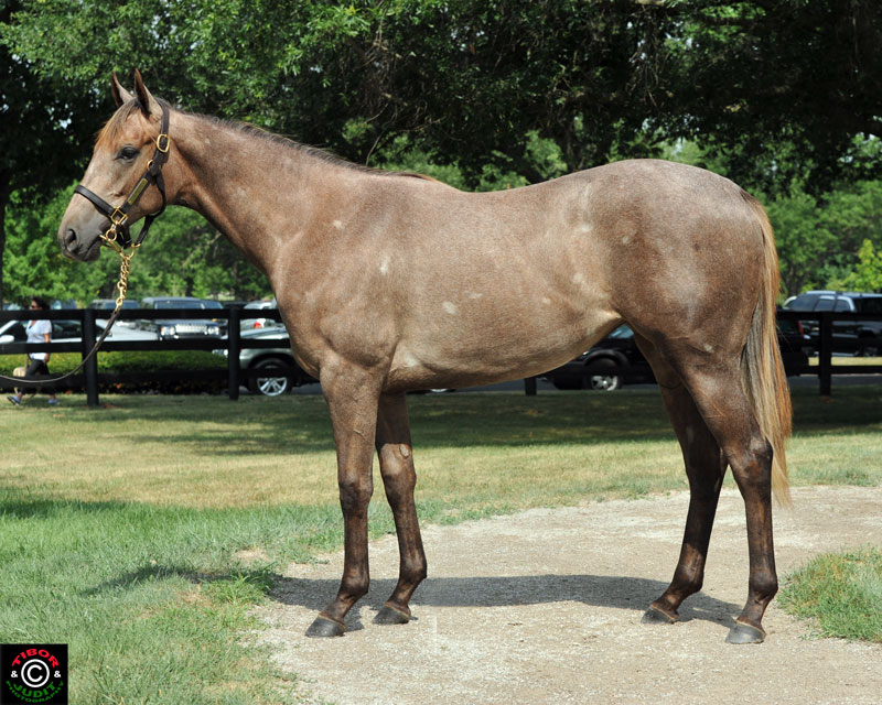 Hip 19. Filly by Exchange Rate out of Senate Caucus. Consigned by Bluegrass Thoroughbred Services agent for Corner Farm John Behrendt.
