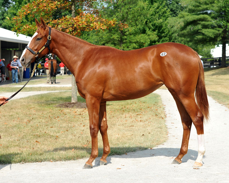 Hip 42. Filly by Hold Me Back out of Stylish Affair. Bred by Mrs. Oliver C. Iselin, III. Consigned by Eaton Sales.