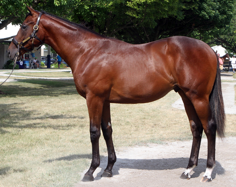 Blame-Princess Birdeye Colt, bred by Louisa Lenehan and Bayne and Chris Welker, sold for $410,000 at Fasig-Tipton July.