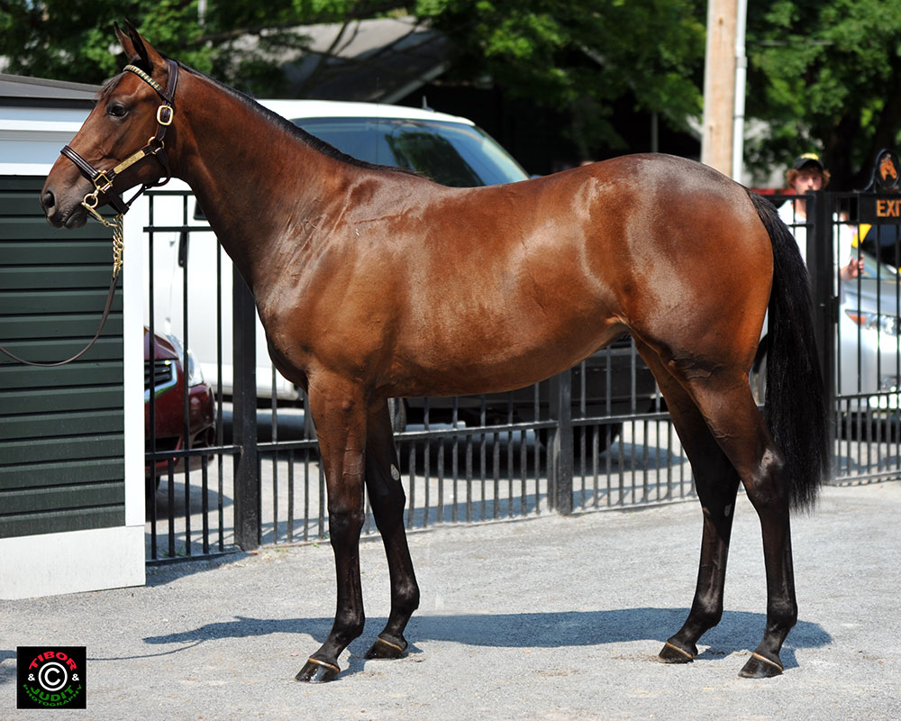 Hip 39. Lazy Lane Farms' Bellamy Road filly out of Lemon Crusta went to Cheyenne Stables for $100,000.