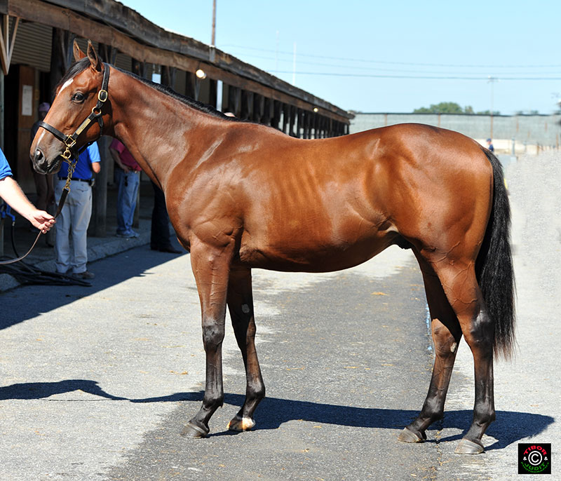 Hip 275, Ecclesiastic colt bought by Rebecca Grenier for $7,500. Sold by Becky Merkel, agent.