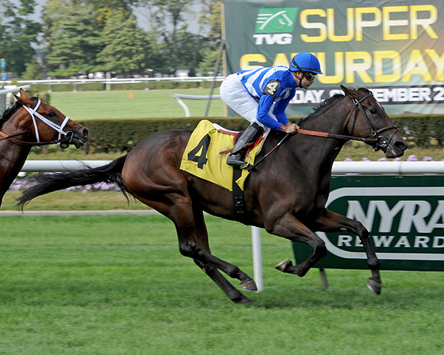 Love and Marriage winning at Belmont September 20. Photo courtesy Adam Coglianese.