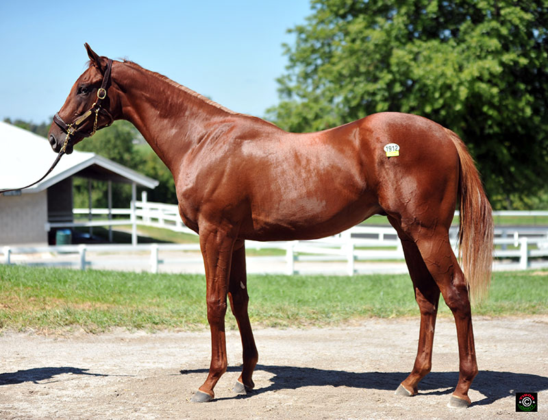 1912 - Eskendereya colt out of Foppy Dancer. Consigned by Taylor Made Sales Agency and bred by Albert P. Coppola. OUT.