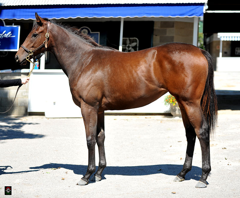 2092 - Exchange Rate filly out of Ruler's Charm, consigned by Brookdale Sales agent for Audley Farm Equine, LLC. This filly's half sister by Harlan's Holiday was just second Saturday in her first start in the Jamestown Stakes! Bought by Normal Williamson for $45,000.
