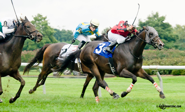 Complete St. winning The George Rosenberger Memorial stakes on Owners Day at Delaware Park on September 13. Photo courtesy Hoofprints Inc.