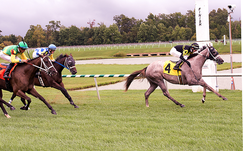 Hooligan was impressive in the first group of the split-field Jamestown. Photo courtesy Jim McCue.