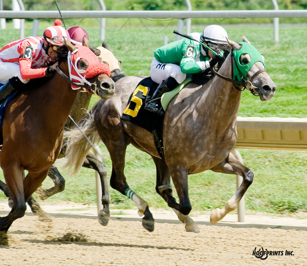 Malice winning at Delaware Park on August 18. Photo courtesy Hoofprints Inc.