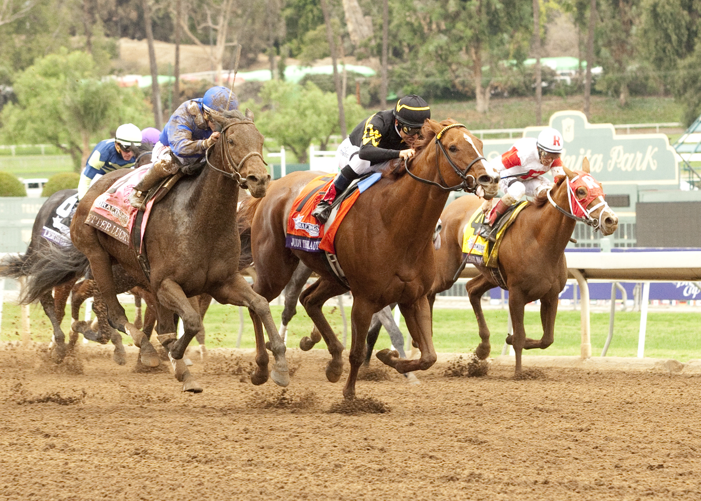 Thank You Marylou was a game third to Judy The Beauty in the Grade I Breeders' Cup Filly & Mare Sprint.
