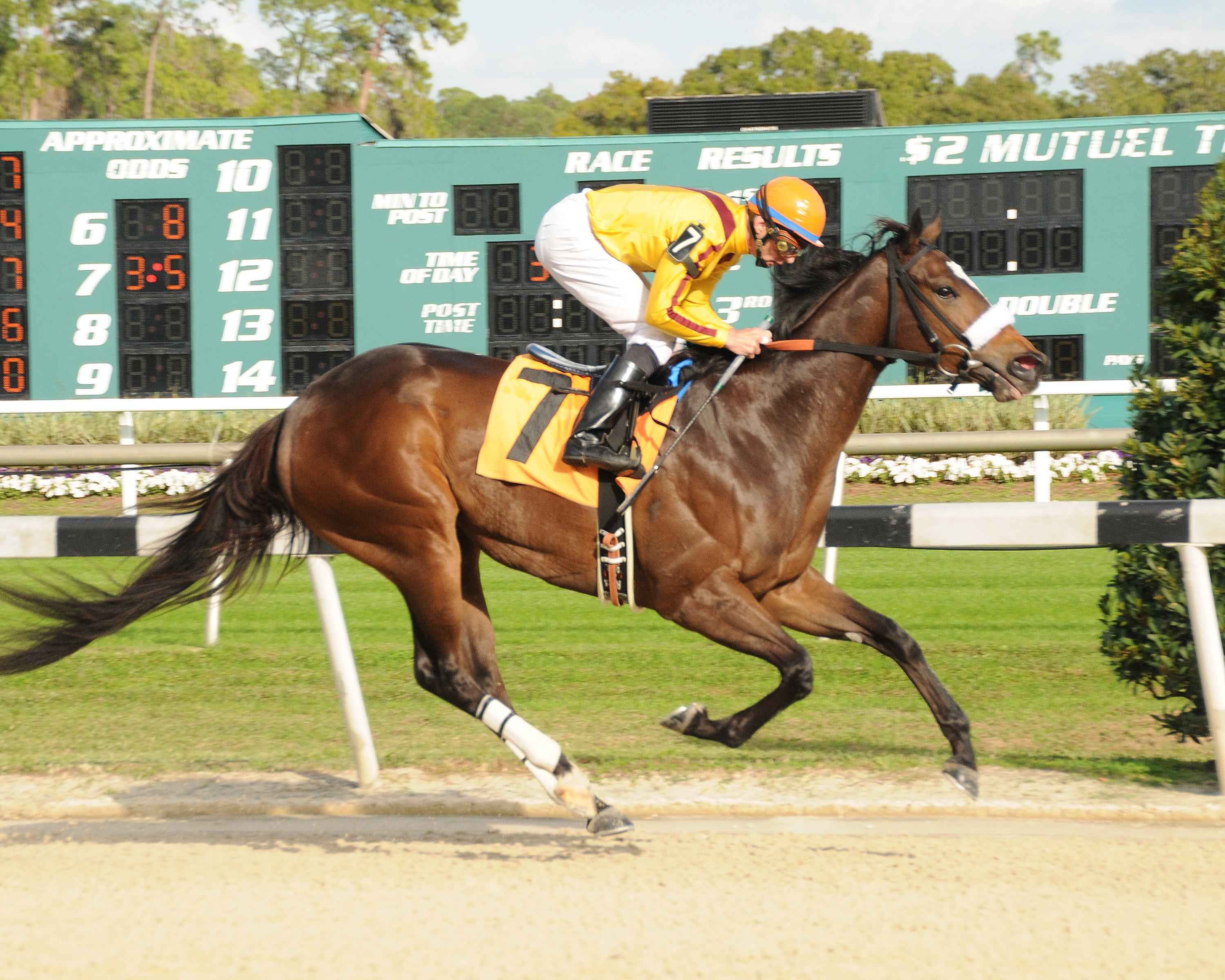 Hanalei Hailey breaking her maiden on December 3 by 11 1/4-lengths. Bred by Hart Farm. Photo courtesy SV Photography.