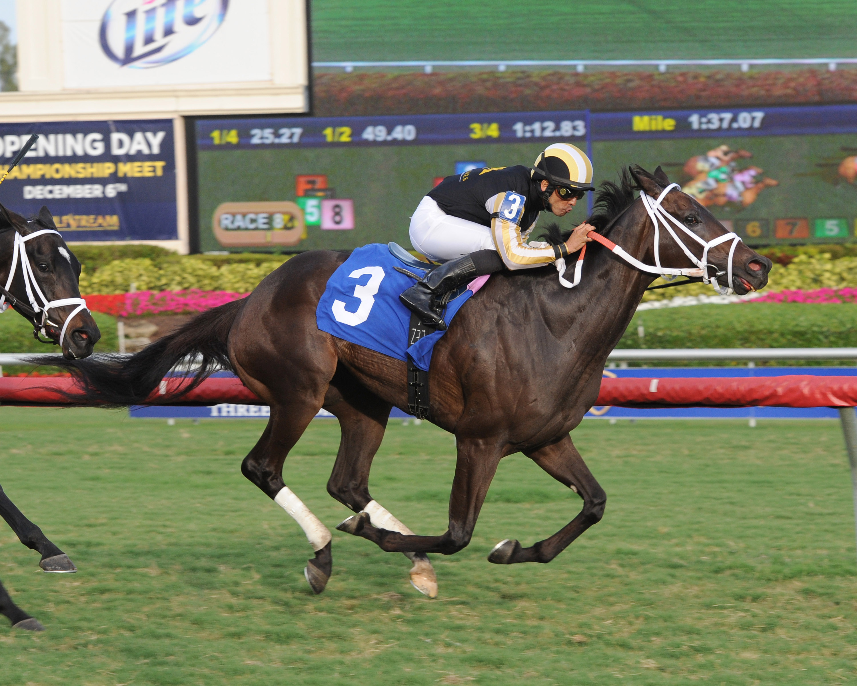 Union Prayer won an allowance at Gulfstream on December 23. Photo courtesy Leslie Martin