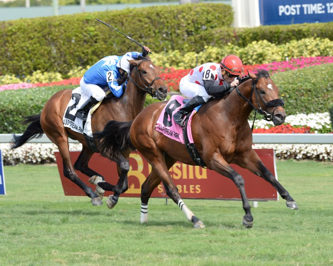 The Bill Backer-bred Jamestown S. winner Moon River ran a good second in the Texas Glitter Stakes in her third start. Photo courtesy Adam Coglianese.