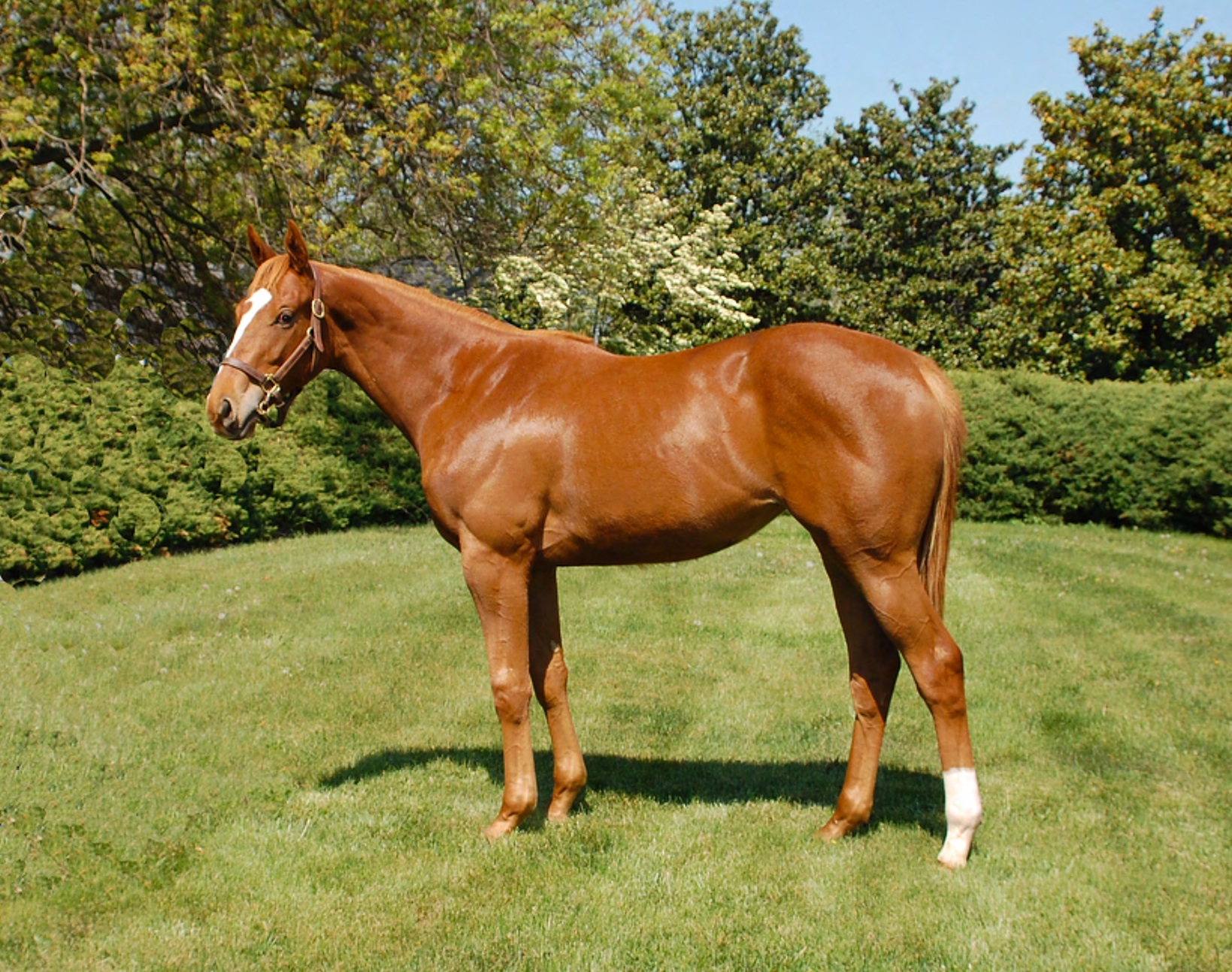 Virginia-bred Stellar Wind as a yearling at Keswick Farm.