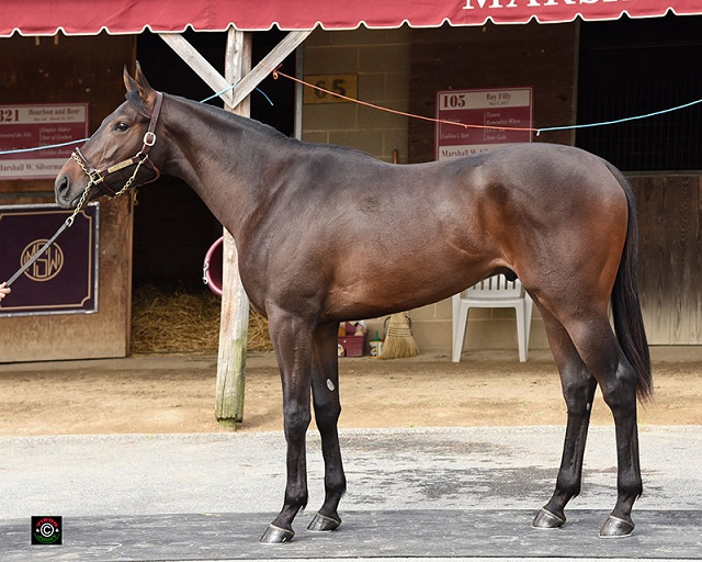 Hip 321. Pioneerof The Nile colt consigned by Marshall Silverman.