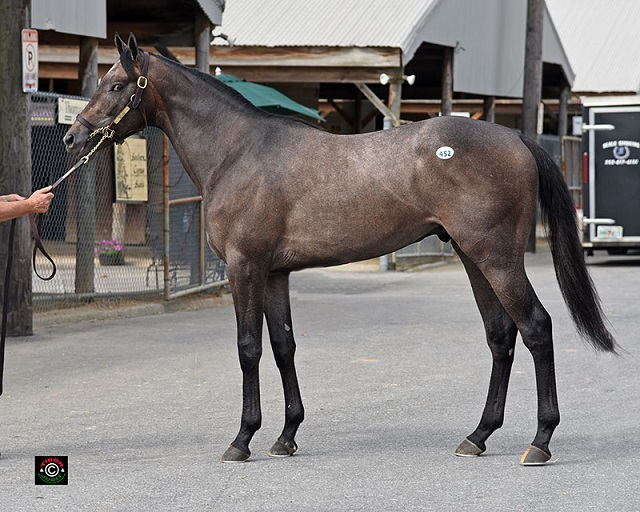 Hip 452. Malibu Moon colt consigned by Pike Racing, agent.