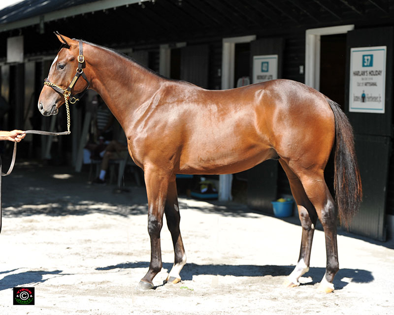 Hip 37, Louisa Lenehan's Harlan's Holiday colt out of Artisanal, bred in Kentucky and consigned by James Herbener.