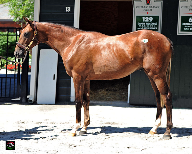 Hip 64, Bill Backer's Exchange Rate colt out of Dinah Lee, consigned by Chilly Bleak Farm.
