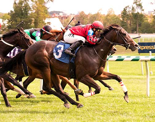 Complete St. wins the 2015 Brookemeade Stakes with all time Virginia leading rider Horacio Karamanos up. Photo by Jim McCue.
