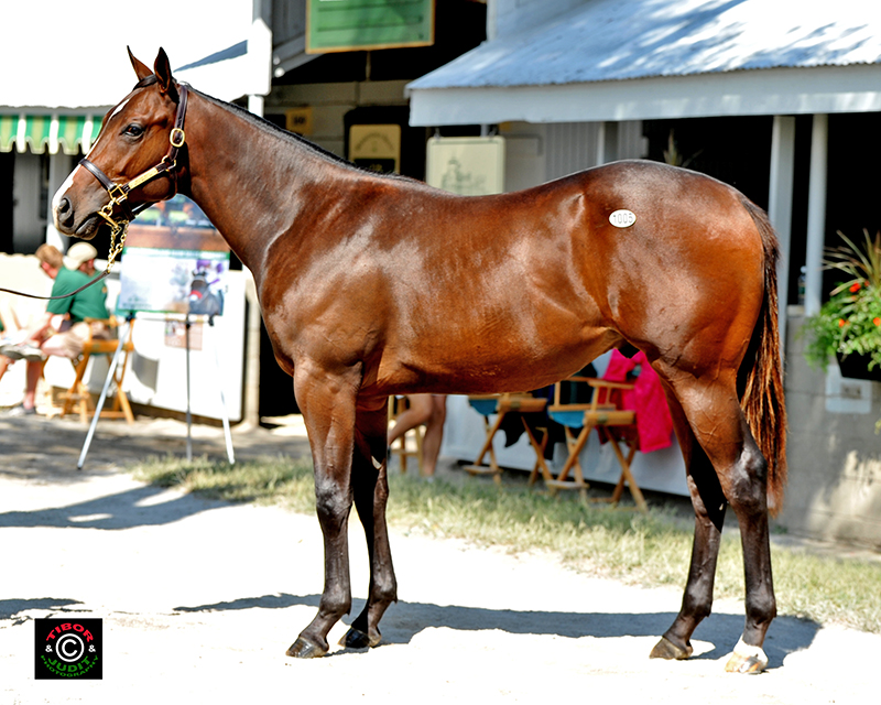 2014 Mizzen Mast colt out of Mystic Miracle (GB)