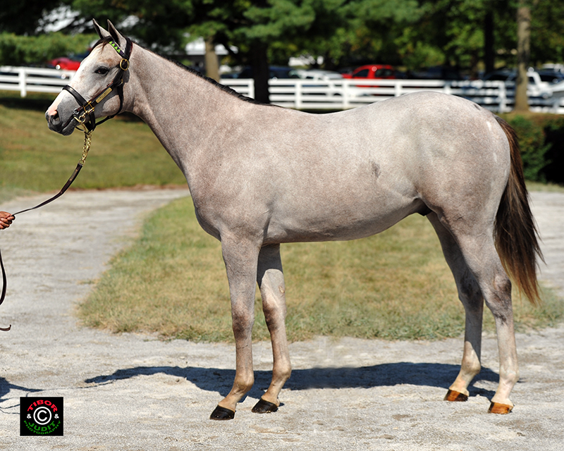 2014 colt out of Pearls by Mizzen Mast