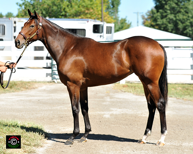 Hip 615 2014 out of Sincerely by Quality Road