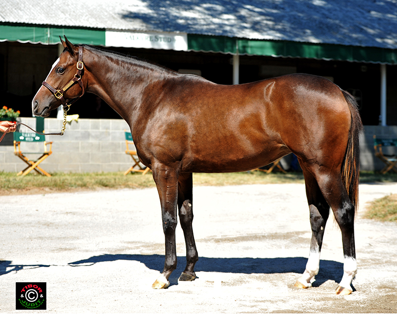 Hipe # 628 2014 Out of Snow Top Mountain by Medaglia d'Oro