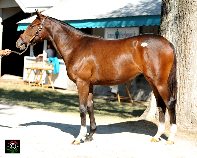 2014 filly by Flower Alley out of Sketch Book