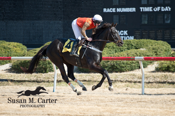 06 April 2013: Mr. Hot Stuff and Sean Flanagan win the training flat race at the Dogwood Classic at Colonial Downs in New Kent, Va. Mr. Hot Stuff is owned by Mrs. S.K. Johnston, Jr and trained by Jack Fisher (Susan M. Carter/Eclipse Sportswire)