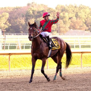 Bred by Albert Coppola, One Go All Go returns to the winners circle at Laurel September 19th after winning the 2015 Grade II, Commonwealth Derby. Jockey Ron Higsby directed the effort.