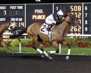 What a Wildcat, bred by Larry Johnson, came from 2nd last to win by 1 3/4 lengths on Labor Day at Presque Isle Downs.