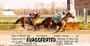 Lael Stables' Exaggerated made it 3-for-4 when she captured an allowance race at Laurel Nov. 11, 2015