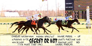 Secret Or Not, bred by Charles Wilson, wins a maiden special weight race at Laurel on November 15, 2015