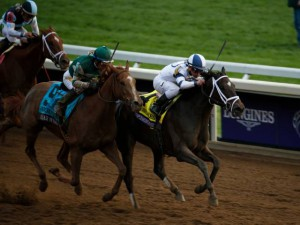 Stellar Wind (outside) duels with Stopchargingmaria in the 2015 Breeders' Cup Distaff. The Virginia-bred was a neck shy at the wire.