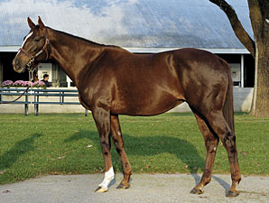 The Rogers' were one of the earliest weanling-to-yearling pinhookers, and notable graduate Sharp Cat, winner of 7 Grade I stakes, is shown here.